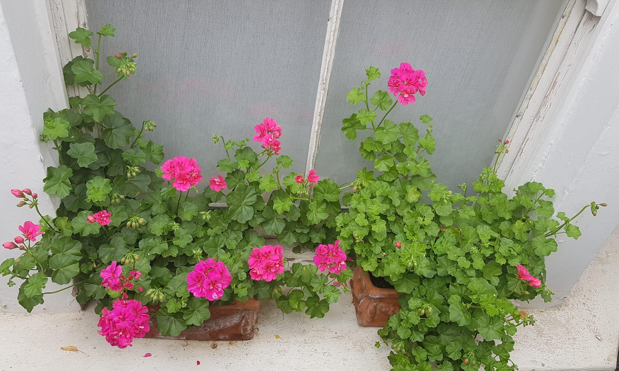 Julia Chi flowers